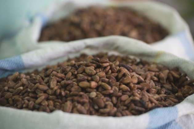 Fave di cacao pronte per la cottura
