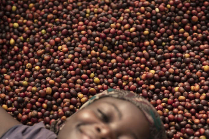 Changing world: the women of coffee-portraits from Masaka