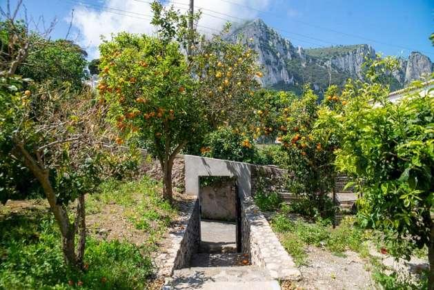 giardino mediterraneo Gin Mare Capri